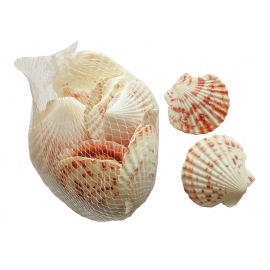 FILET DE 150GR DE COQUILLES ST JACQUES